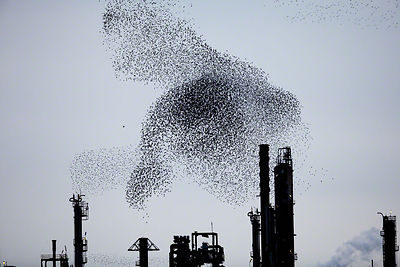 Refinery Flocks 8, 2009