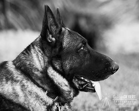 Profile of a GSD