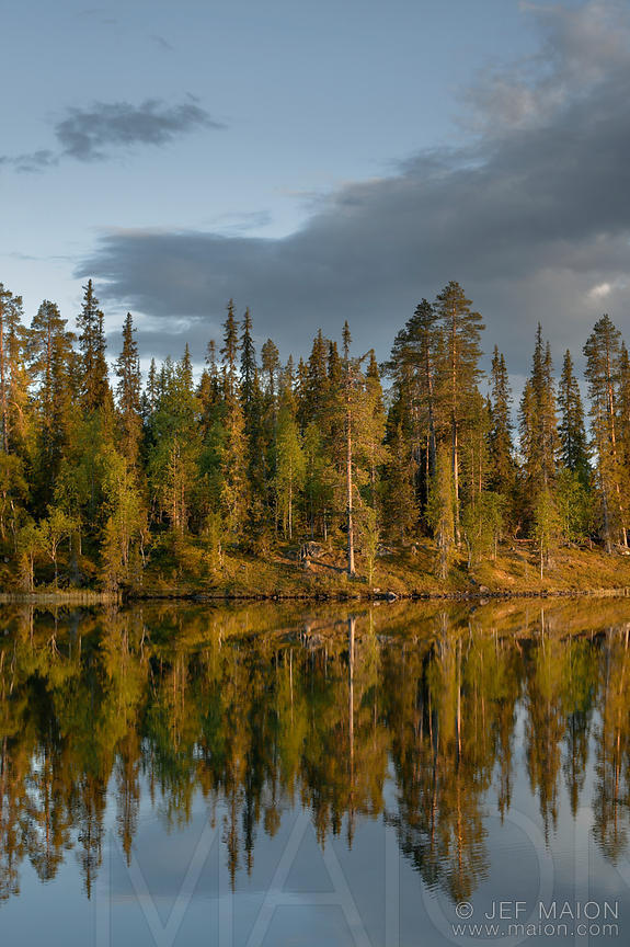 Forest and lake at sunset