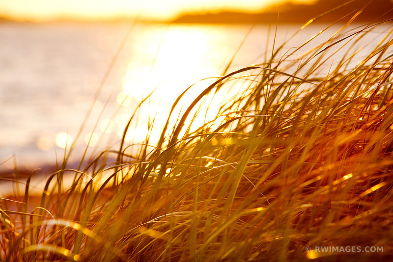 CAPE COD AUTUMN GRASSES NATURE ABSTRACT