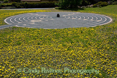Wildflower Meadow Labyrinth