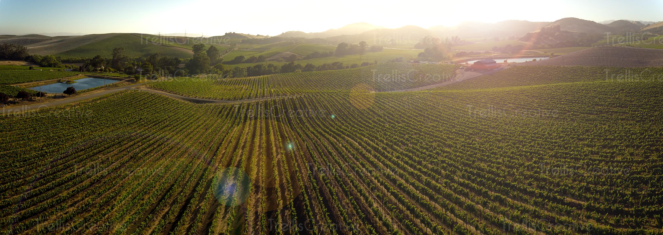 Colorful aerial photo of Carneros in Sonoma and Napa Valley