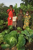 Children enjoying a drink of milk in the family garden, with some big cabbages in foreground, Mbale, Uganda, Africa