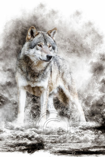Art-Digital-Alain-Thimmesch-Loup-46