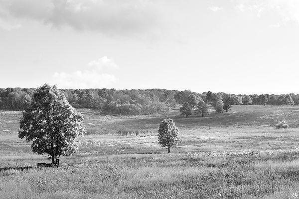 BIG MEADOWS PRAIRIE SHENANDOAH NATIONAL PARK VIRGINIA BLACK AND WHITE