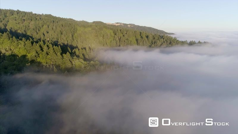 Cloud covered forest Near Bolinas Bay California