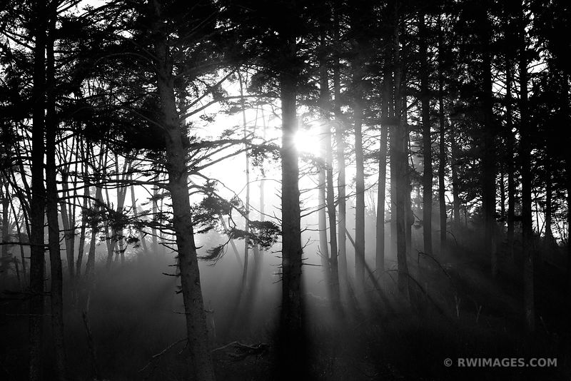 COASTAL FOREST OLYMPIC NATIONAL PARK WASHINGTON PACIFIC NORTHWEST BLACK AND WHITE