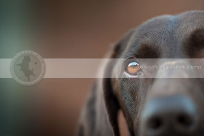 closeup of dog eye with bokeh background