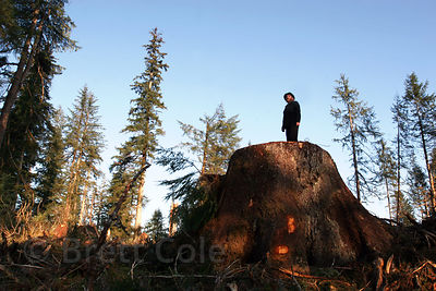 A forest activist stands on the stump of a giant fir tree (more than 500 years old) logged in the Chugach National Forest, Alaska