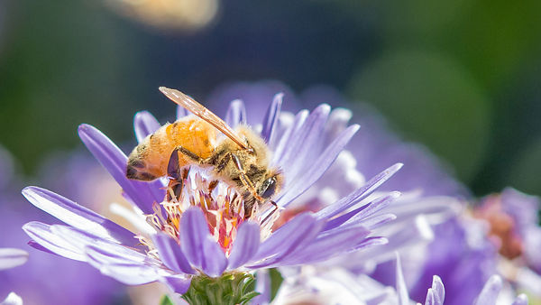 Bee-licious!