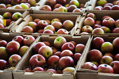 Locally grown apples for sale at a wholesale market in Amish country, Lancaster, Pennsylvania