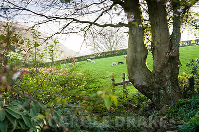 Views out of the garden reach to Farleton Knot, across farmland where sheep graze. Summerdale House, Lupton, Cumbria, UK