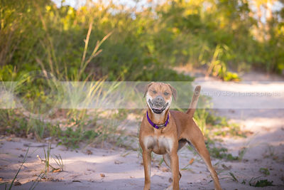 humorous dog winking standing in sand with vegetation