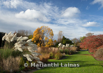Autumn colours, Ness Gardens