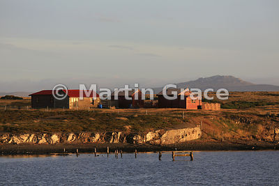 Part of Darwin settlement, East Falkland, in evening sunlight seen across Darwin Harbour from Darwin House
