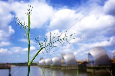 Closeup of foliage against a blue sky with the Thames Barrier out of focus in the Background