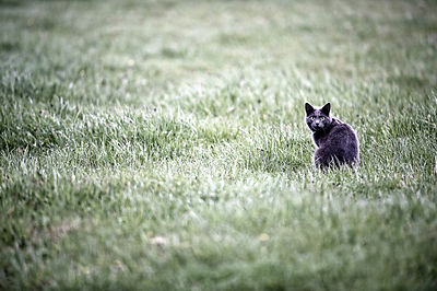 Cat In Field