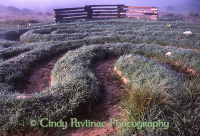 Meadow Labyrinth Dawn