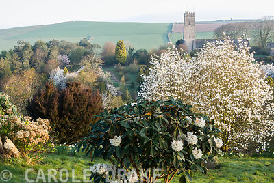 View northward to the church of St Michael and All Angels across a steep sided valley clothed with a rich and varied collection of trees and shrubs including many conifers, magnolias, rhododendrons and camellias. Marwood Hill Gardens, Barnstaple, Devon, UK