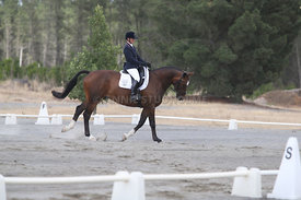 SI_Festival_of_Dressage_310115_Level_1_Champ_0667