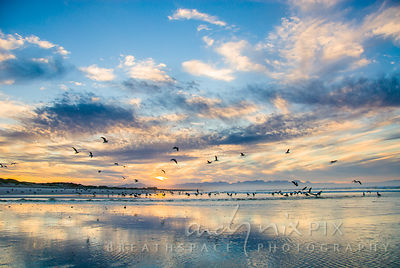Flock of seagulls on beach at sunrise, yellow clouds reflected on wet sand