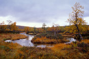 Horse-shoe shaped stream in an autumn swamp under a cloudy sky