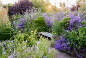 Wooden bench framed by clipped box, Nepeta 'Six Hills Giant' and borders brimming with grasses and herbaceous perennials including Valeriana officinalis, Stipa gigantea, geraniums, Deschampsia caespitosa 'Goldschlier' and Phlomis russeliana at Sea View, Cornwall in June