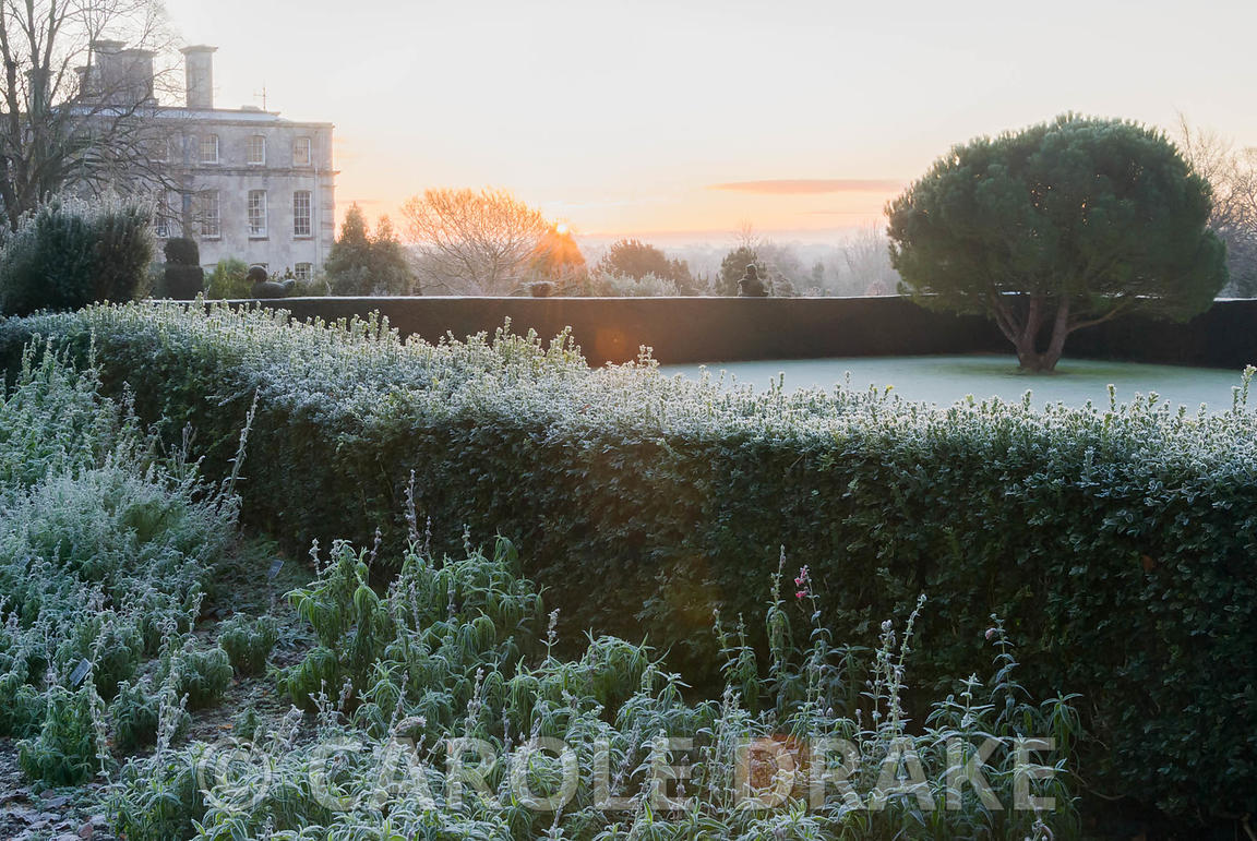 Sun rises above formal gardens defined by yew and box hedging with frosted plants in the Penstemon border in foreground and distinctive shape of the stone pine, Pinus pinea, on the croquet lawn. Kingston Maurward Gardens, Dorchester. Dorset, UK