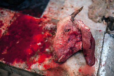 Severed goat heads site on a table at a butcher's stall in Sovabazar, Kolkata, India.