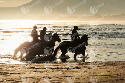 Horses at the beach