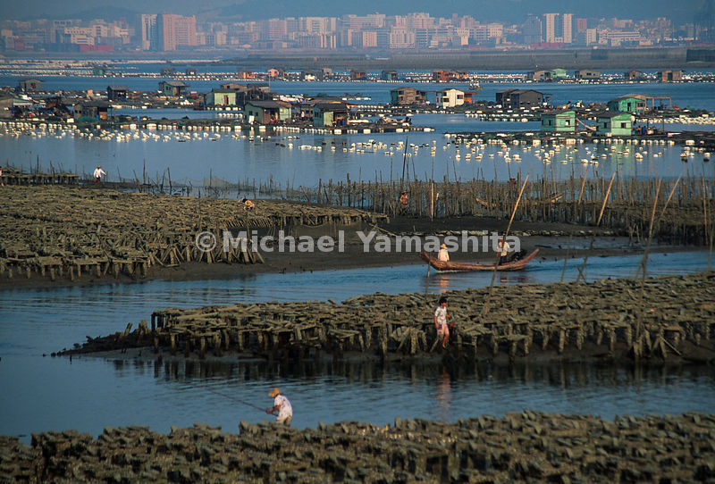 Maluan Bay. Fish Farms and shellfish beds are the largest producers of oysters in China. Feeding happens twice a day at 6am and 4pm. .Xiamen, China