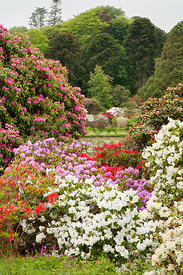 View through window in mixed rhododendrons towards Round Pond