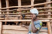 Woman with goat, talking on her mobile phone. Rwanda