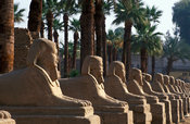 Avenue of sphinxes in the Temple of Luxor, Luxor, Egypt