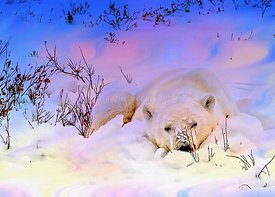 Kathy_s_snowy_polar_bear_sleeping_Northern_lights