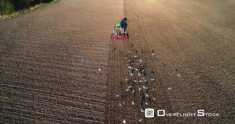 Tractor Plowing, Aerial Slo Motion View of Seagull Birds Flying Around a Plow Machine Sowing, Sunny Spring Evening Dawn, Uusimaa, South Finland