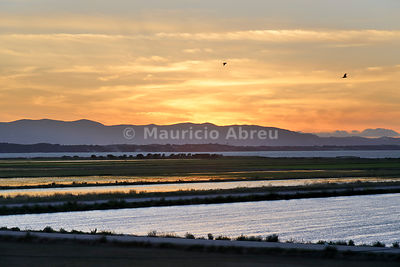 Rice fields at sunset. Comporta, Alentejo, Portugal
