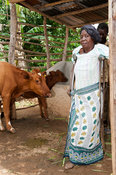 Disabled Kenyan lady on crutches with her dairy cow she recieved from a charity.