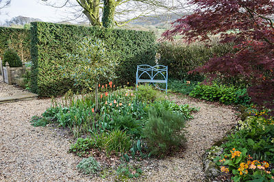 Gravel garden with standard variegated holly, rosemary and orange tulips, with fells beyond. Summerdale House, Lupton, Cumbria, UK