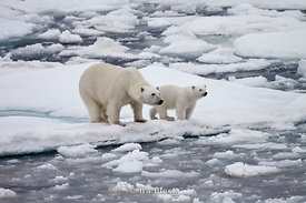 A female polar bear and her cub look out across the icy water in Svalbard, Norway.