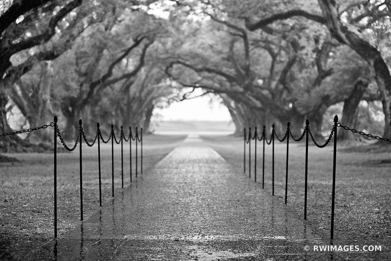 RAIN OAK ALLEY PLANTATION VACHERIE LOUISIANA BLACK AND WHITE