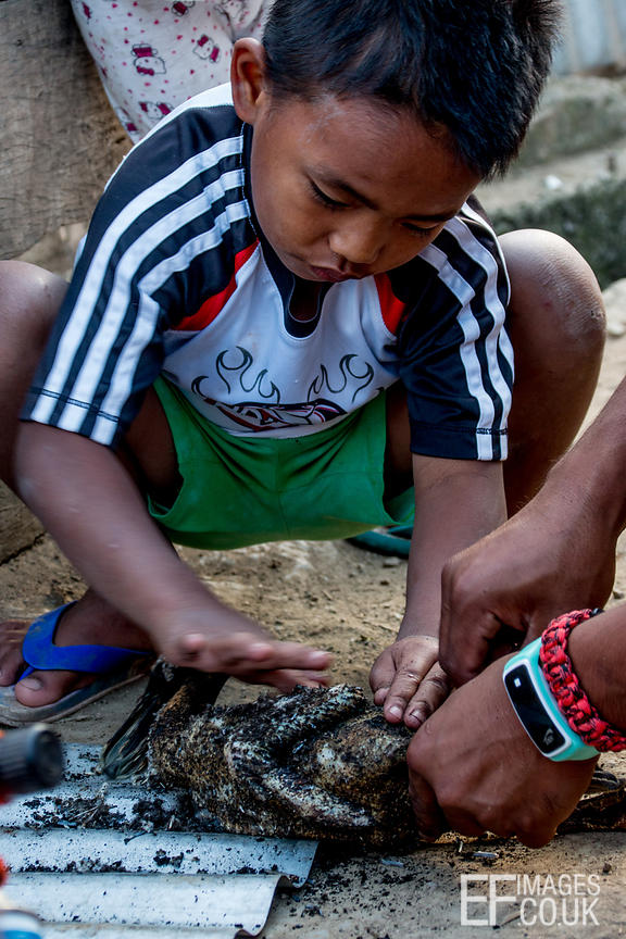 Little Kalinga Tribe Boy Helps To Pluck A Duck