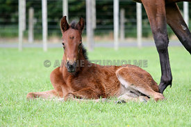 LAfoals_221008_069_Nancy_Hope
