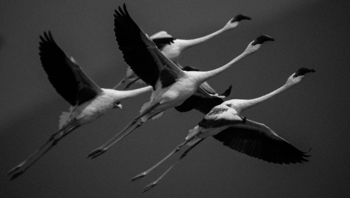 48977-Bird_Laurent_Baheux
