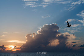 Clouds at sunrise and a bird Miami Beach, Florida