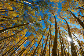 Aspen Canopy | San Juan Mountains, CO