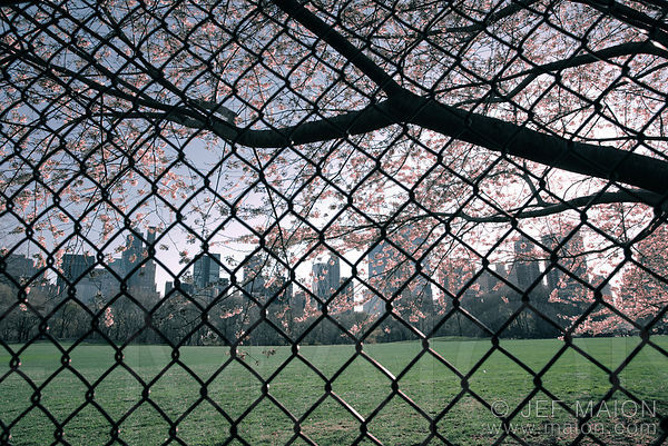 Fence, grass and city