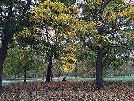 Autumn in Green Park