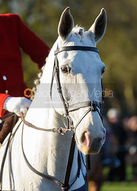 at the meet in Melton Mowbray - The Cottesmore Hunt in Melton Mowbray 2/1