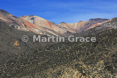 Striking variety of colours of compacted volcanic ash above typical pre-Puna vegetation, Region XV, Chile
